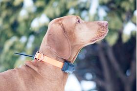 Skaņas signāls (BEEPER) – suņa kustības / apstāšanās noteikšana