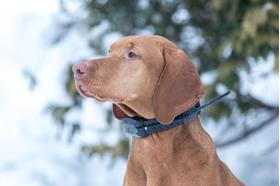 Norobežojuma fukcija – suņa atrašanās vietas akustiskā robežas kontrole