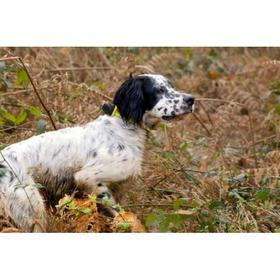 Pateicoties četriem dažādiem toņiem , pīkstulis CANIBEEP 5 ļauj noteikt no viena līdz četru suņu atrašanās vietu vienlaicīgi momentos, kad suns nekustās vai skrien.