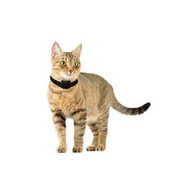 Canifugue Small для кошек