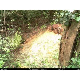 Охотничья камера NUM'AXES SL1009