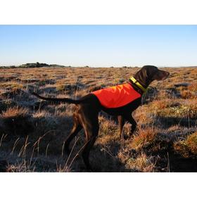 Если Ваша собака никогда не работала с ошейниками звукового контроля, начинайте использовать ошейник в режиме наблюдения два или три первых выхода.