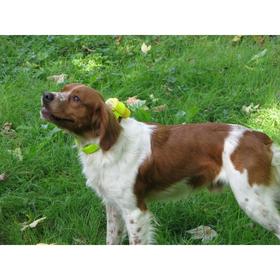 CANIBEEP Pro NUM'AXES, pīkstulis tiek izmantots medībās un suņu gatavošanai tām sliktas redzamības gadījumos.