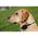 GPS-ошейник для собак