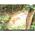 Охотничья камера NUM'AXES PIE1010 с MMS и E-MAIL